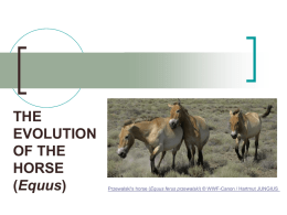 Powerpoint Presentation: Evolution of the Horse