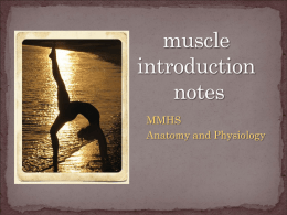 Intro Muscle Lecture (.ppt)