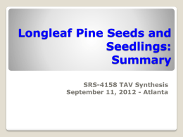 LLP Seeds and Seedlings