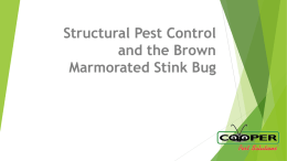 Structural Pest Control and the Brown Marmorated Stink Bug